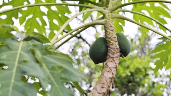 Profitable trees in India