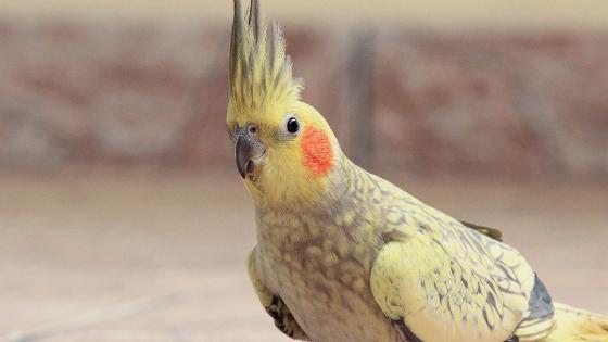 Parrots in Garden India