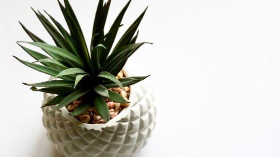 Indoor plants absorb humidity