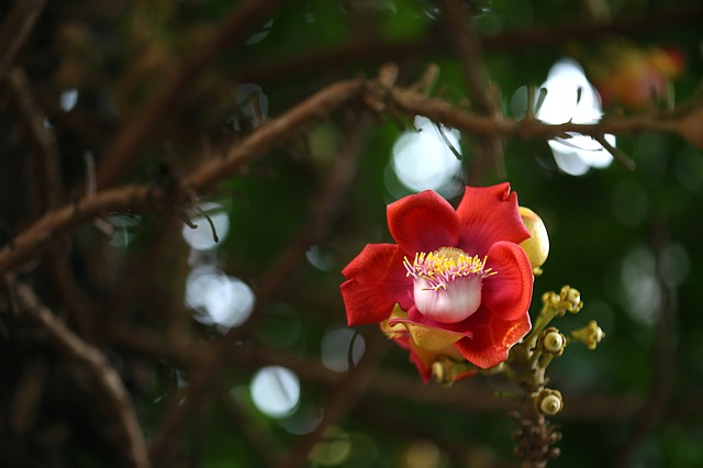 nagalingam flower