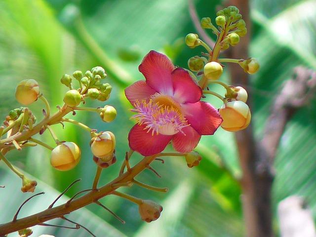 nagalinga fruits