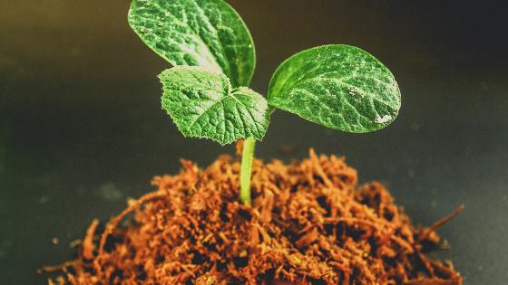 plants nutrients