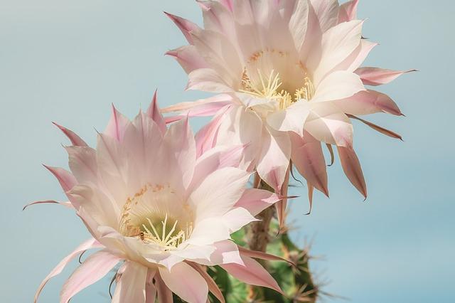 raat ki rani flower
