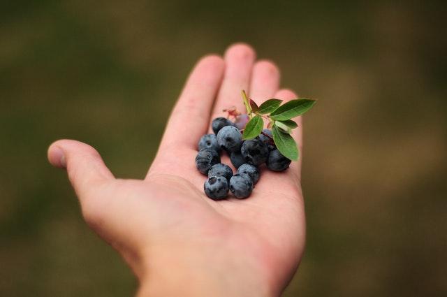 blackberry in pot