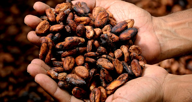 Cacao contains caffeine