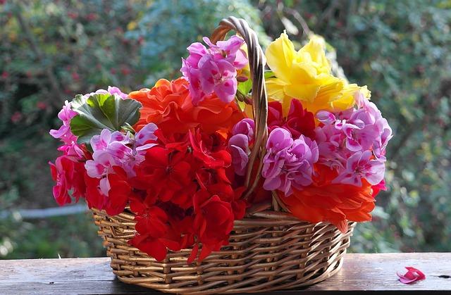 Petunia in Hanging Basket