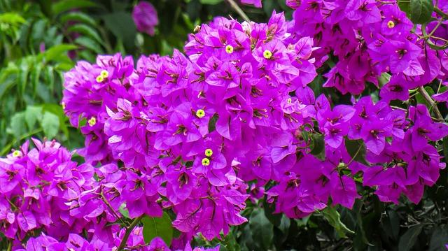365 Days Flowering Plants in India   Flowers That Bloom in all Seasons