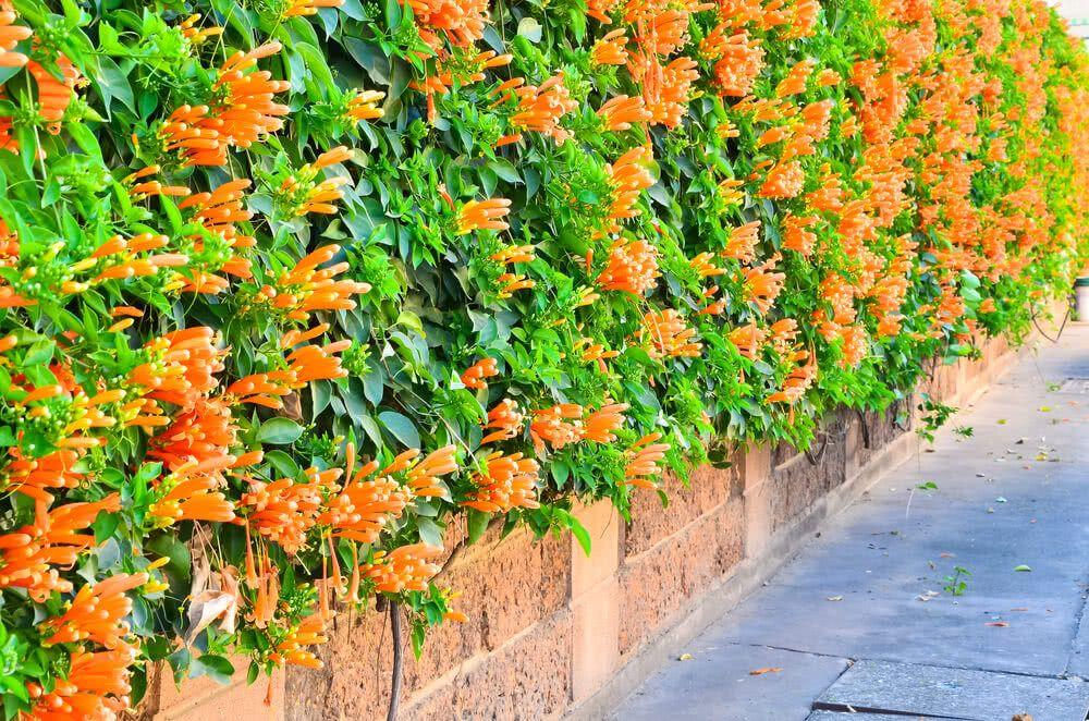Creeper plants:
